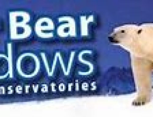 Polar Bear Windows becomes main club sponsor